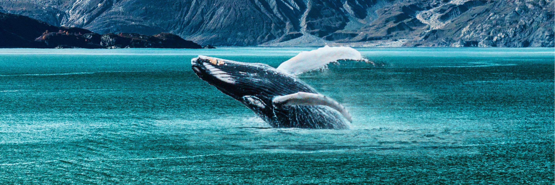 Explore Alaska with Cosmos