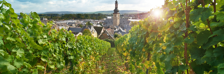 A Taste of the Rhine (Northbound)