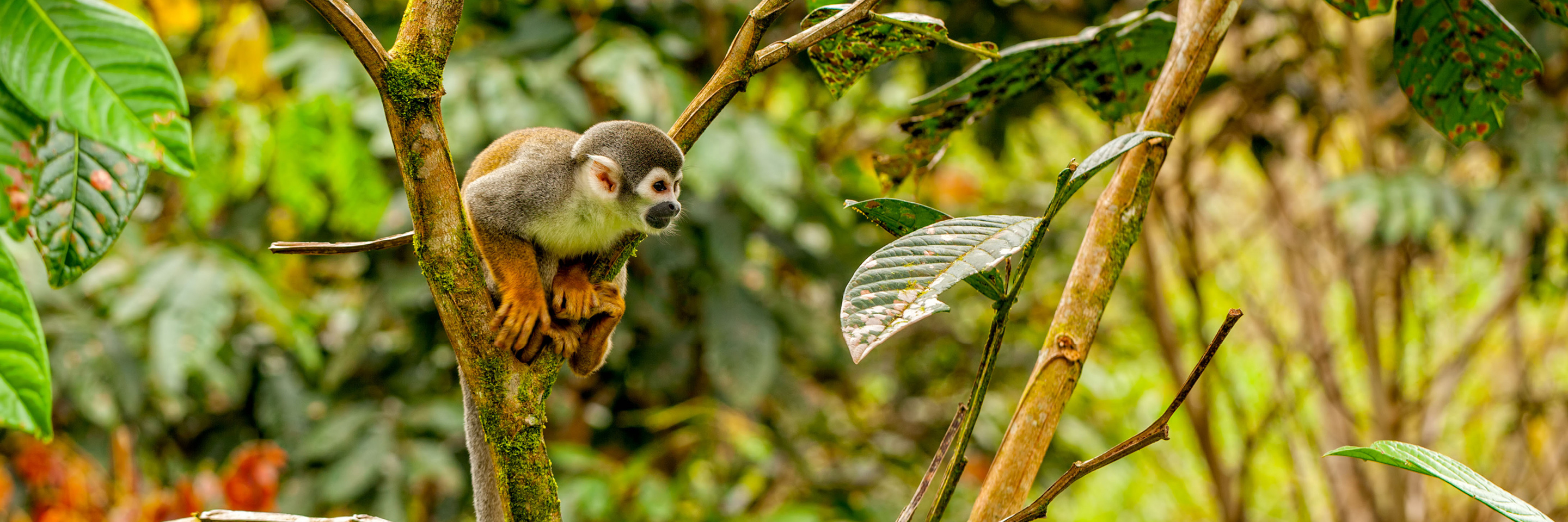 Discover the Galápagos & Peru with the Amazon