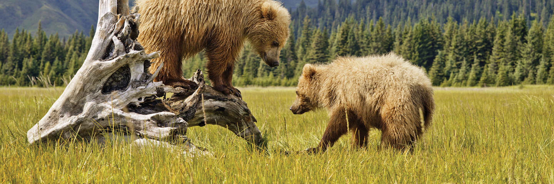Nature's Best: Alaska