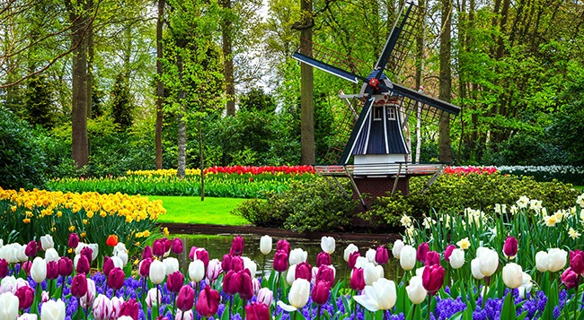 rhine-tiptoe-through-tulips.jpg