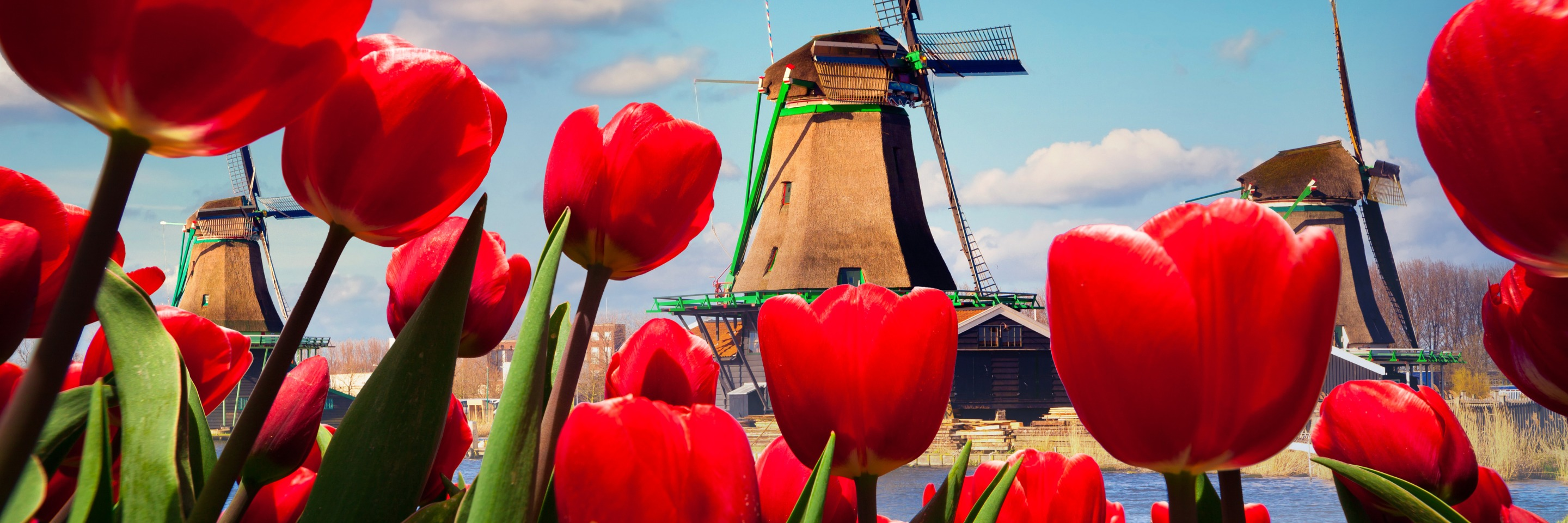 Tulip Time Cruise with 1 Night in Amsterdam & 3 Nights in Paris for Garden & Nature Lovers