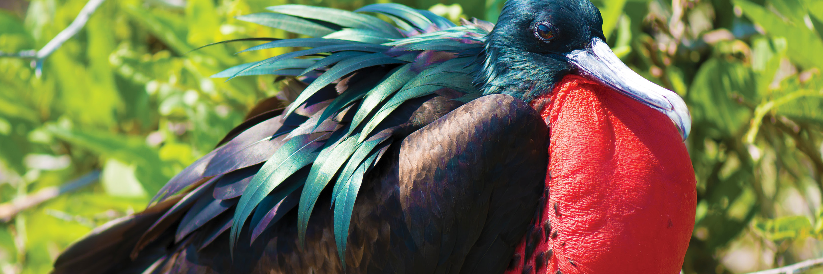Mysteries of the Inca Empire with Peru's Amazon & Galapagos Cruise