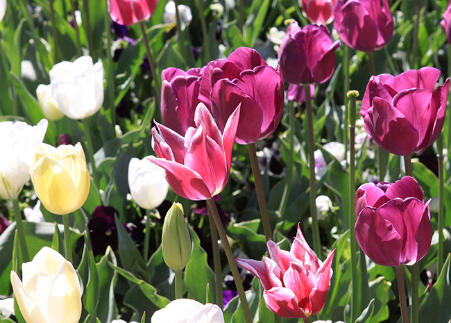 floriade-springtime.jpg