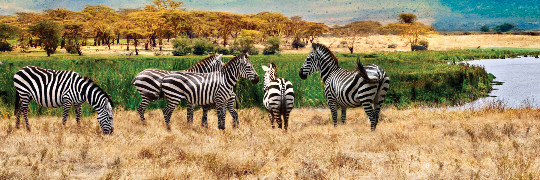 On Safari in Kenya & Tanzania with Nairobi