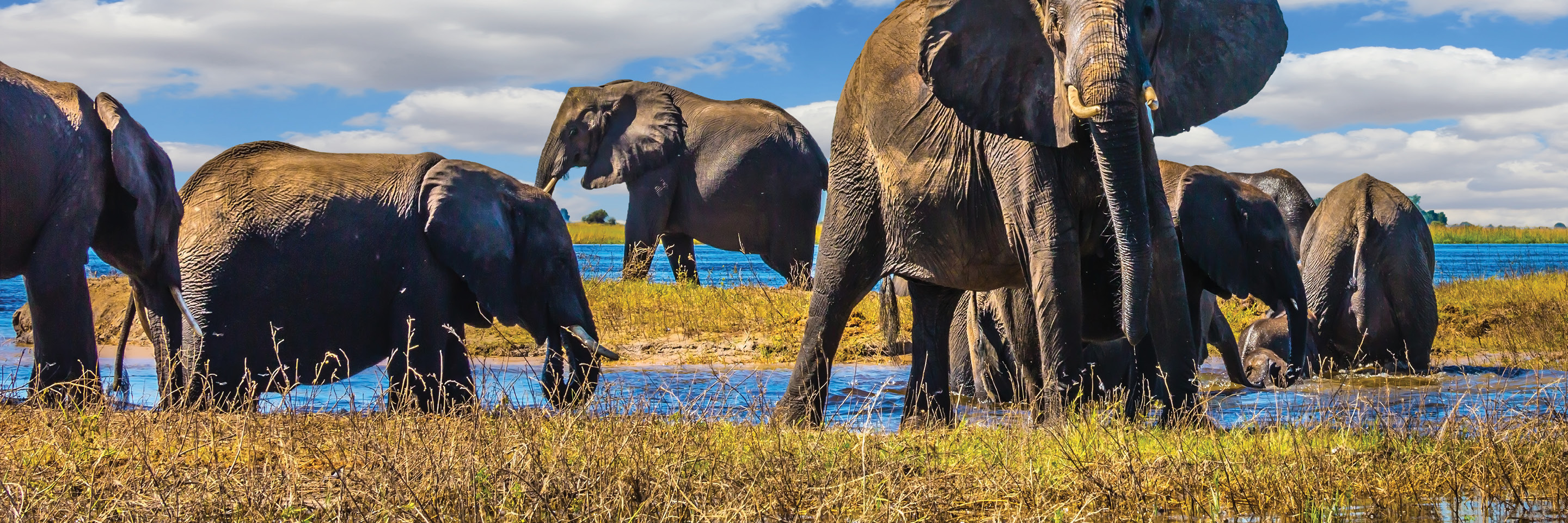Splendors of South Africa & Victoria Falls with Chobe River Cruise
