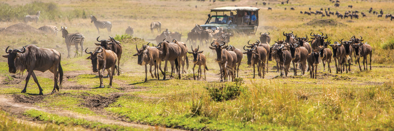 Splendors of South Africa & Victoria Falls with Maasai   Mara