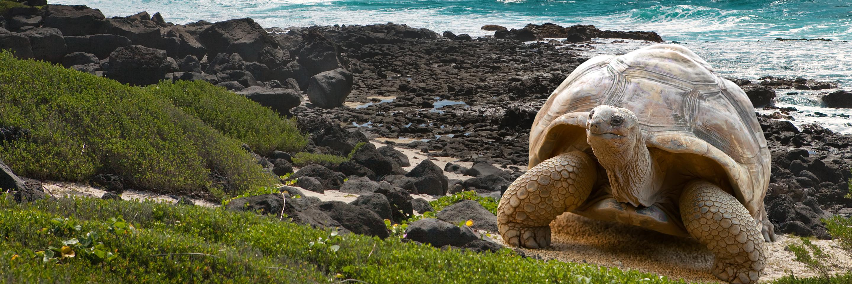 Galapagos-Cares.jpg