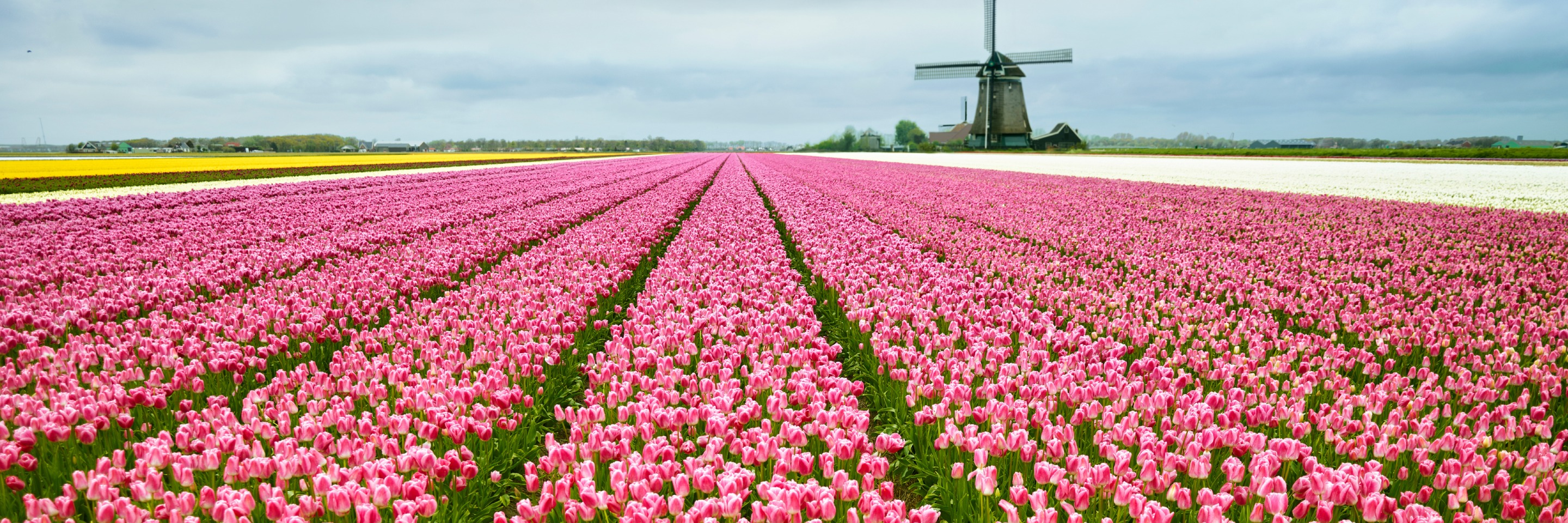 Tulip Time Cruise with 1 Night in Amsterdam & 3 Nights in Paris for Beer Enthusiasts