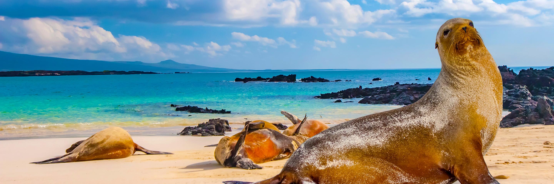 Galapagos Legend Hero