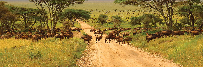 Kenya & Tanzania: The Safari Experience