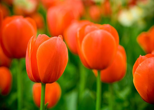 floriade-holland.jpg