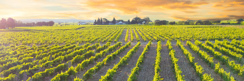 Rhine & Rhône Revealed for Wine Lovers (Southbound)