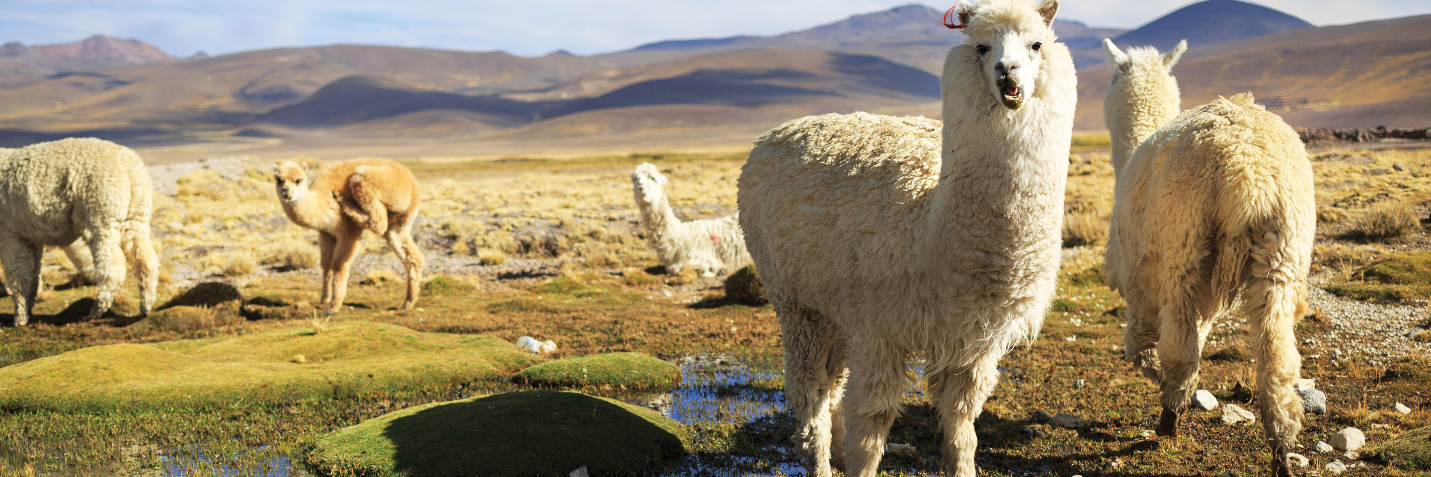 Mysteries of the Inca Empire with Arequipa & Colca Canyon
