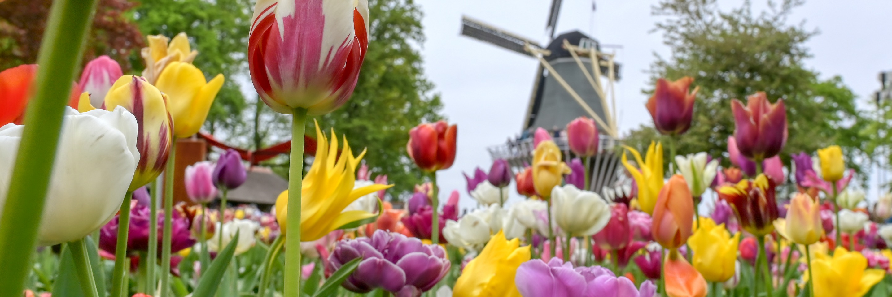 Tulip Time Cruise with 1 Night in Amsterdam for Garden & Nature Lovers